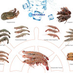 crostacei_full